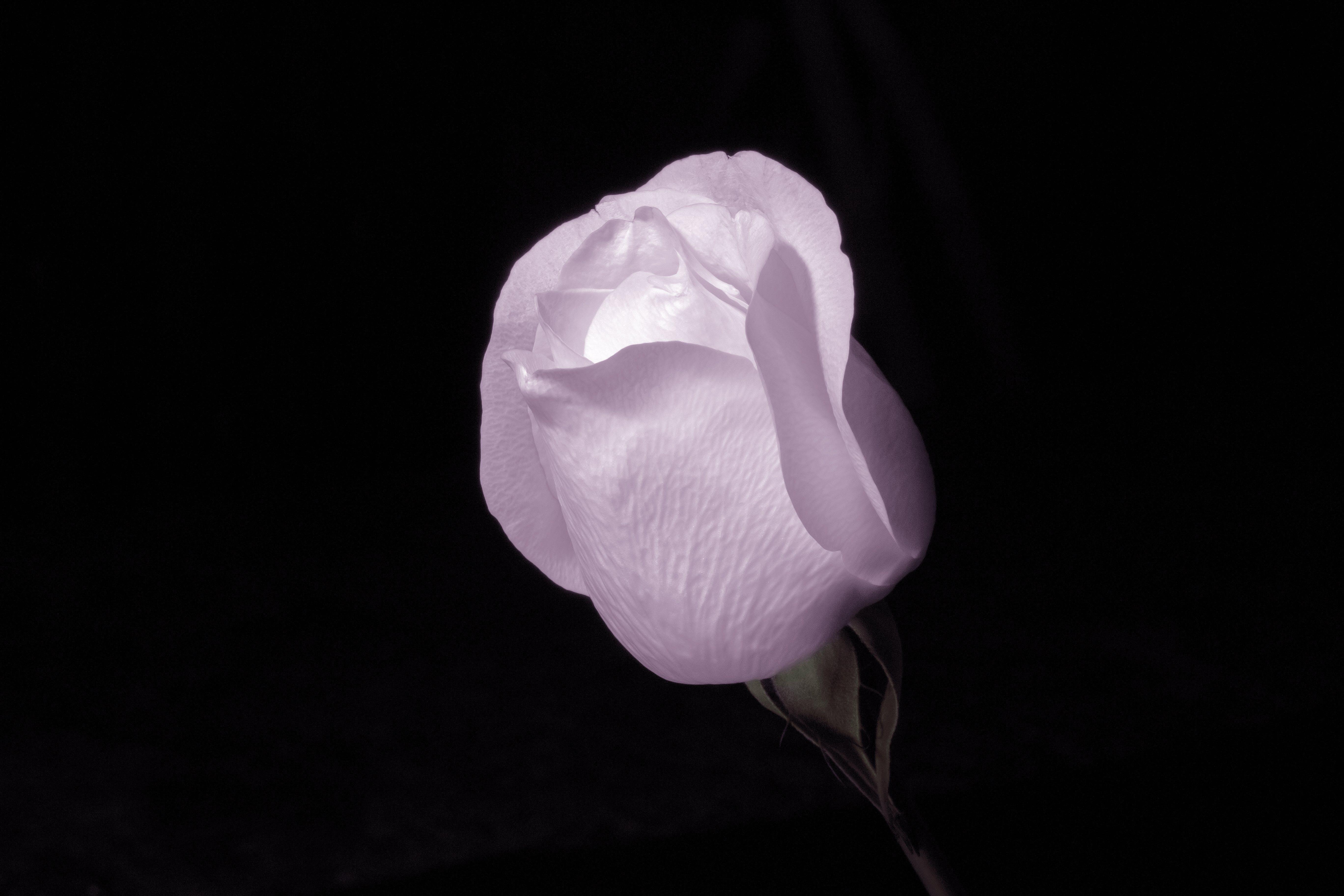 beautiful, blooming, bright