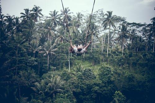 Fotos de stock gratuitas de arboles, aventura, balanceándose, balancearse