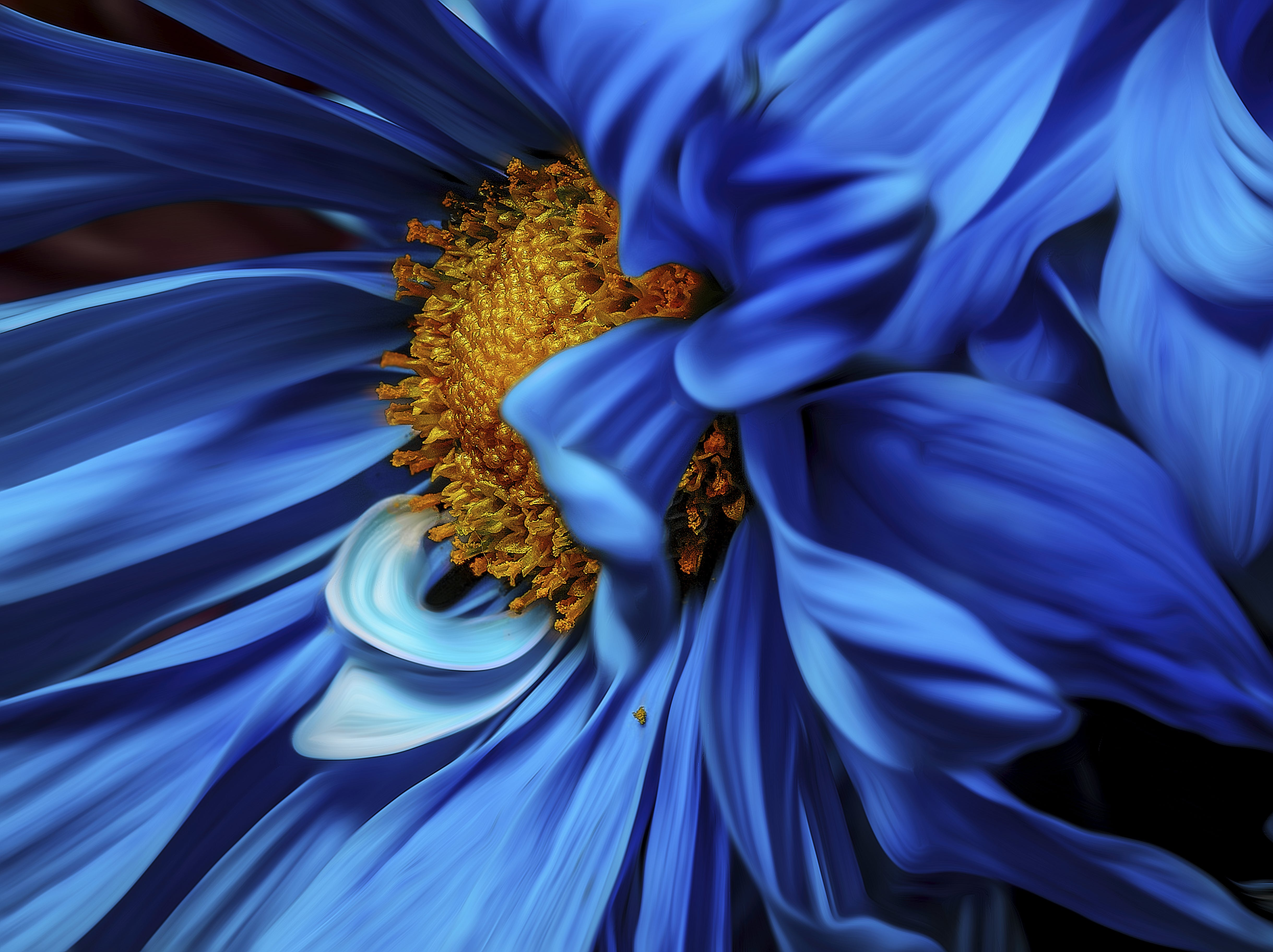Micro Focus Photography of Blue and Orange Petaled Flower