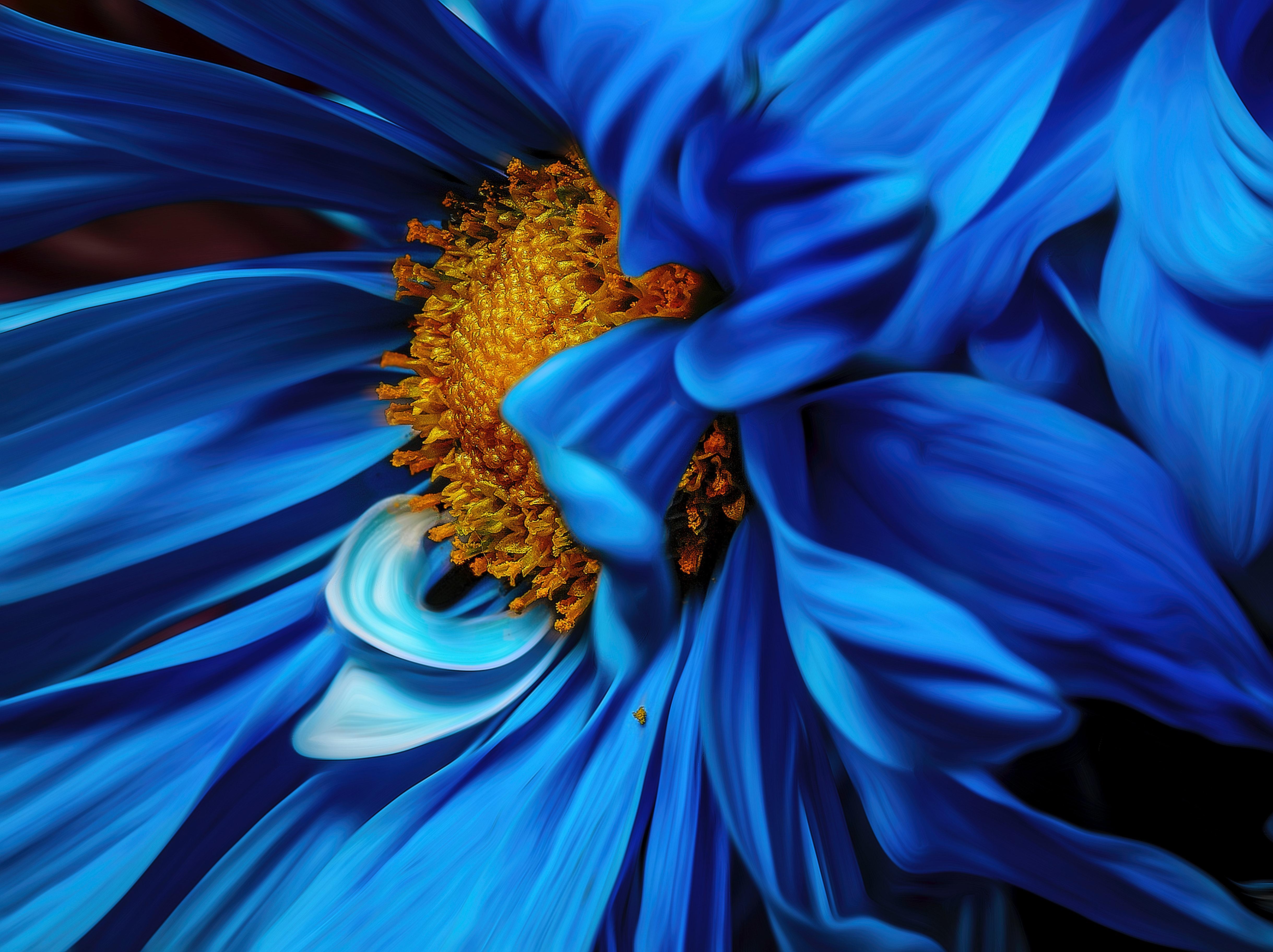 1000 Great Blue Flowers Photos Pexels Free Stock Photos