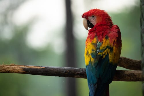 Photo of Red, Blue, and Yellow Parrot on Tree Branch