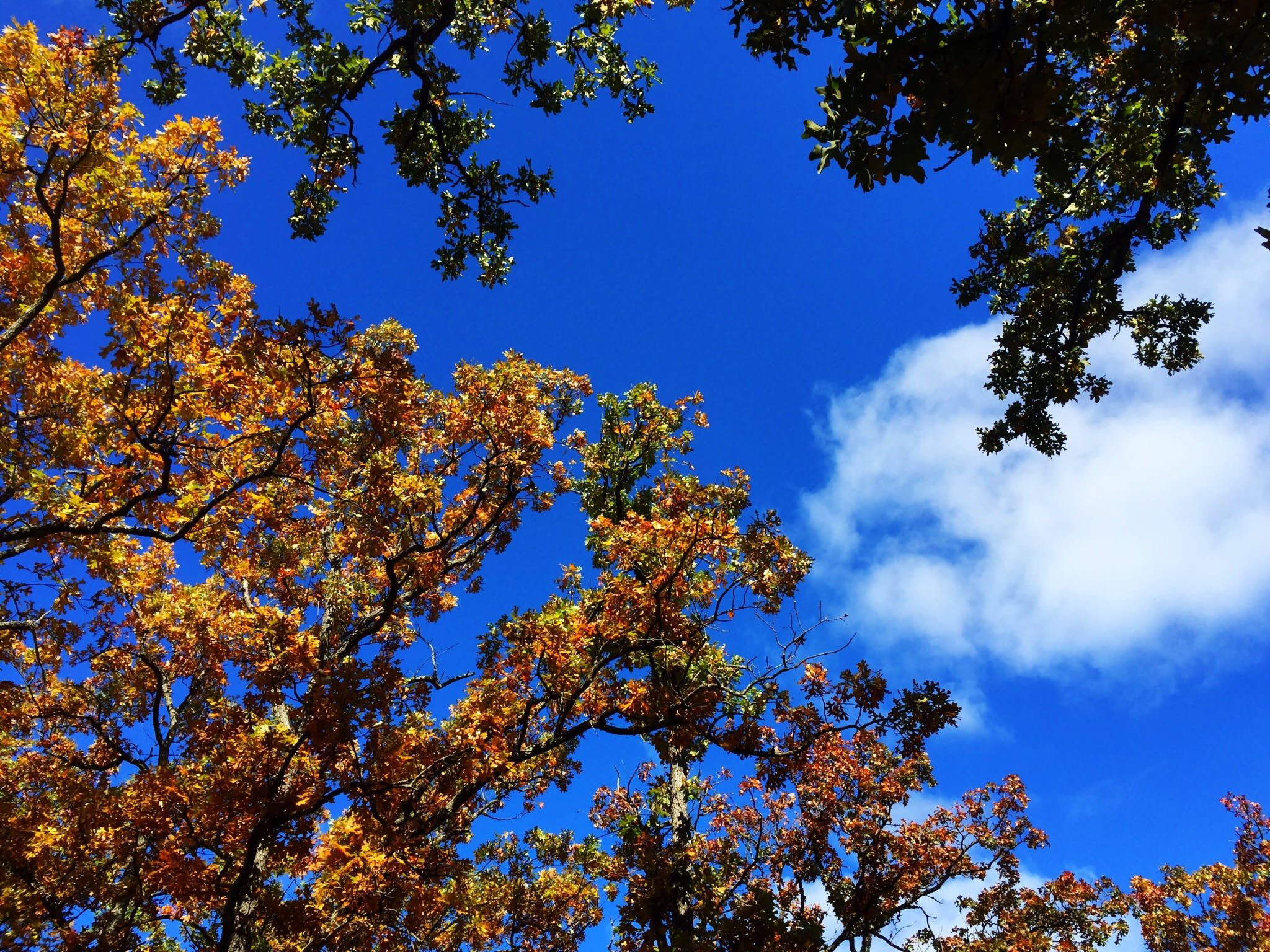 Free stock photo of sky, clouds, blue, autumn