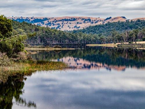 Gratis arkivbilde med eflection, fiske, lake repluse, tasmania