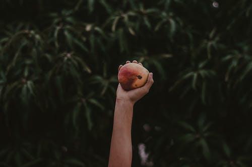 Ilmainen kuvapankkikuva tunnisteilla hedelmä, hedelmäpuu, kädet ylhäällä, kädet ylös