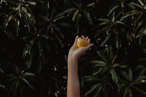 Person Holding Round Yellow Fruit