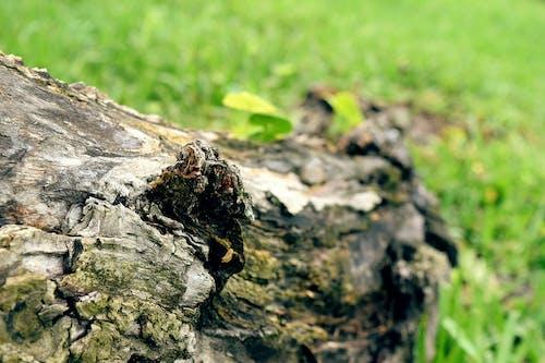 ağaç, ağaç gövdesi, ahşap, çim içeren Ücretsiz stok fotoğraf