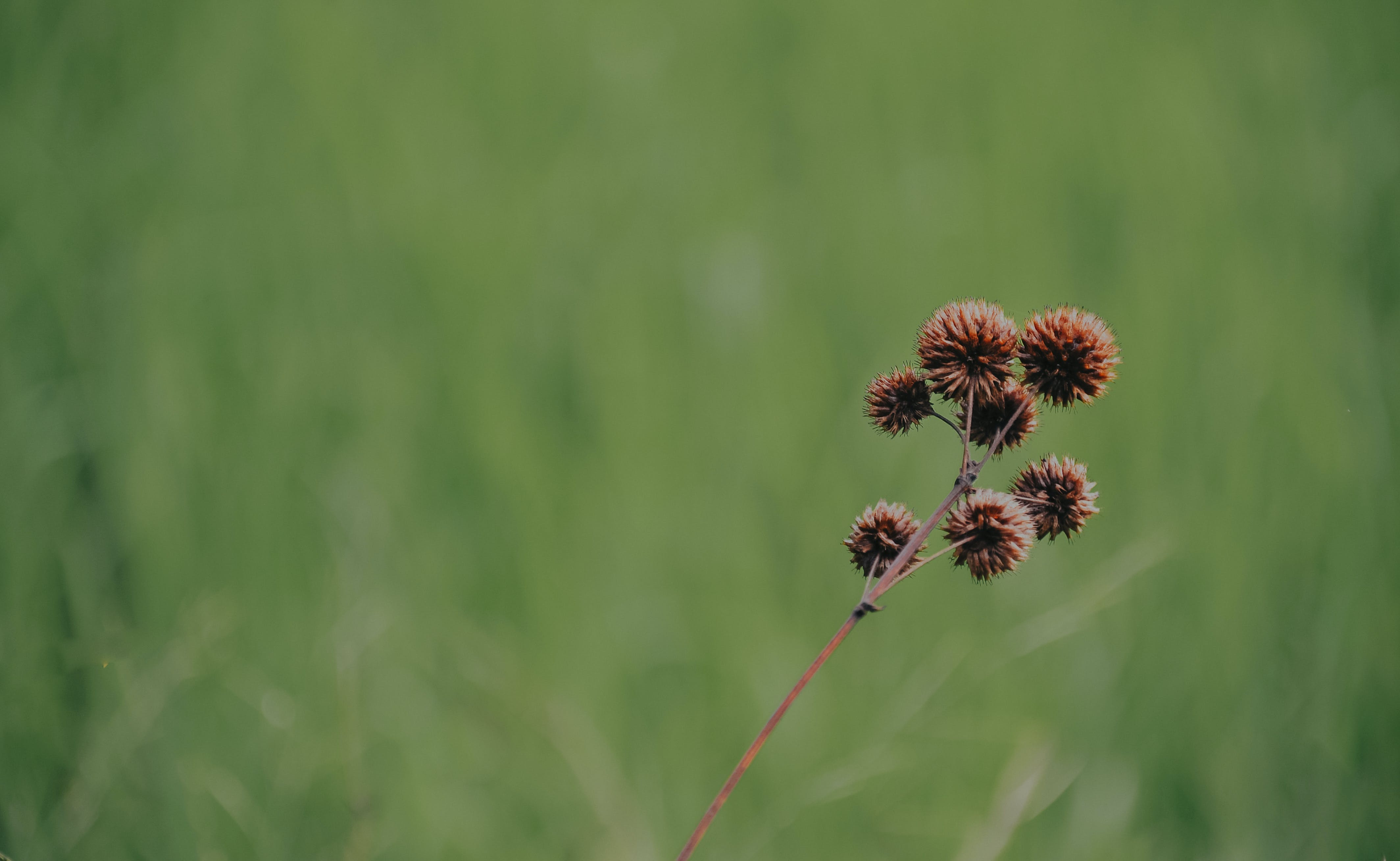 Brown Petaled Floweer