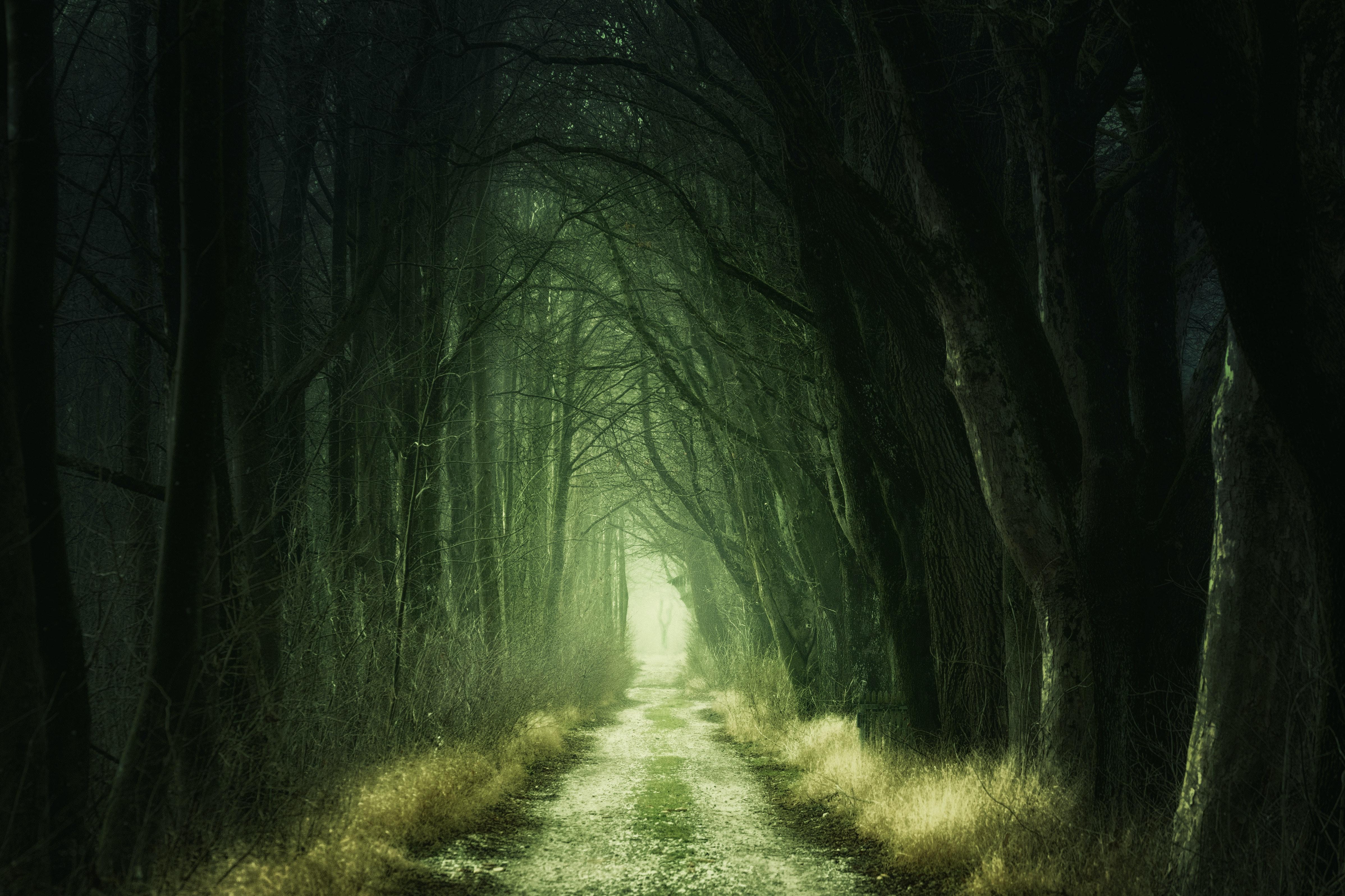 1000 Beautiful Dark Forest Photos 183 Pexels 183 Free Stock