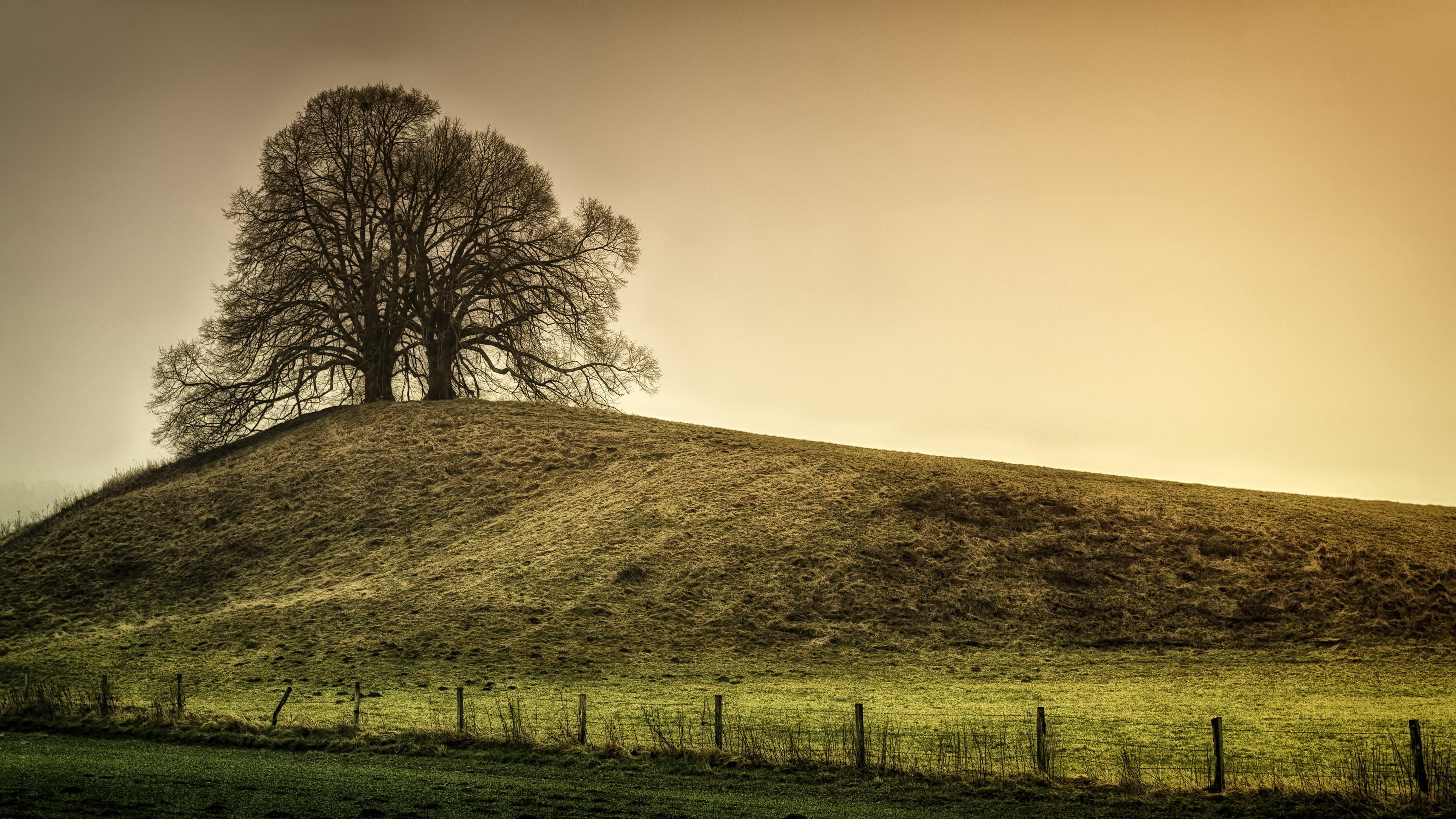 Silhouette of Tree on Top of the Hill