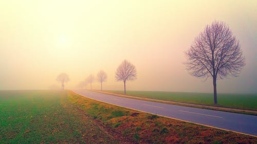 Photo of Road in the Middle of Foggy Field