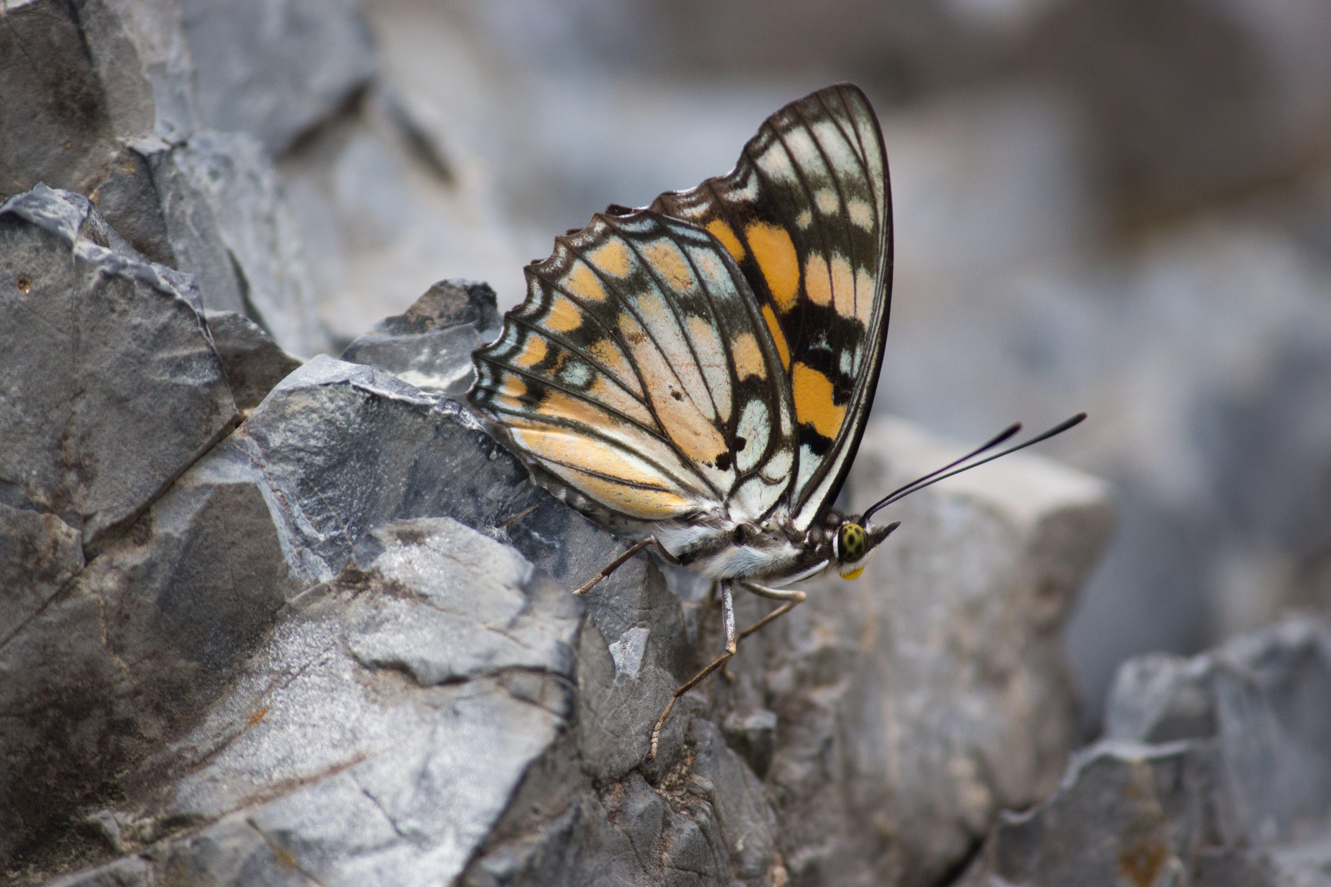 Gratis stockfoto met #butterfly #butterflies #inspiration, #butterflyart, #colorful #natureonly #naturelovers, #macro #macofhotography