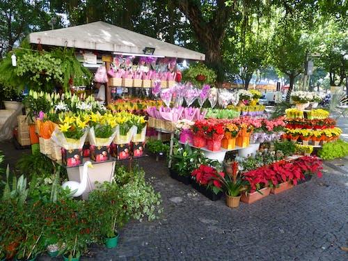 Photos gratuites de brésil, marché aux fleurs, rio de janeiro