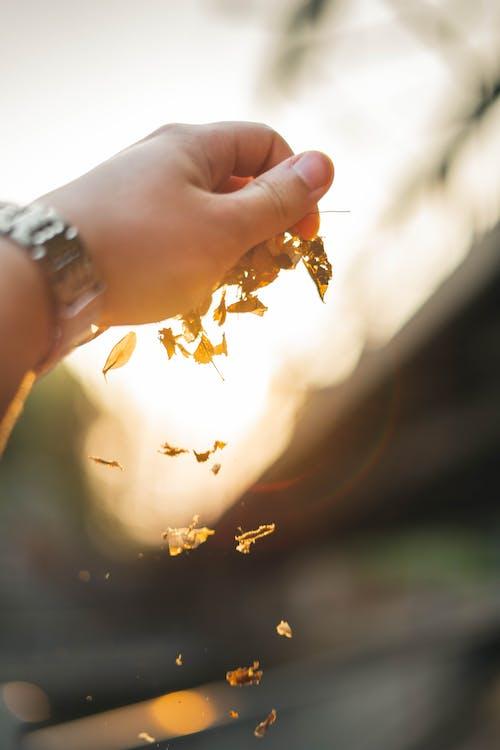 efecto desenfocado, hojas secas, mano