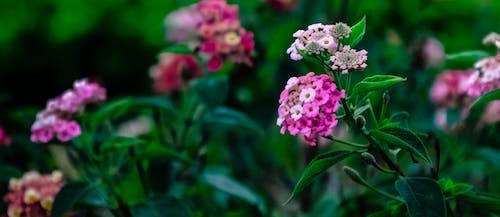 Kostnadsfri bild av blommor, flora, makro, närbild
