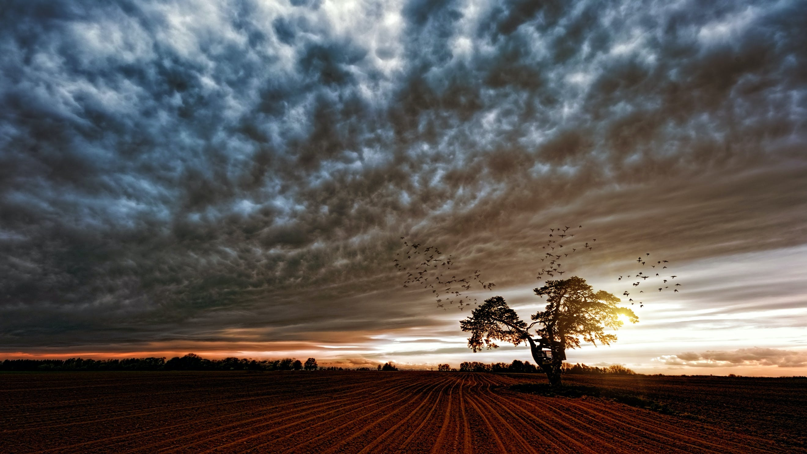 Silhouette of Trees Under Cloudy Skies