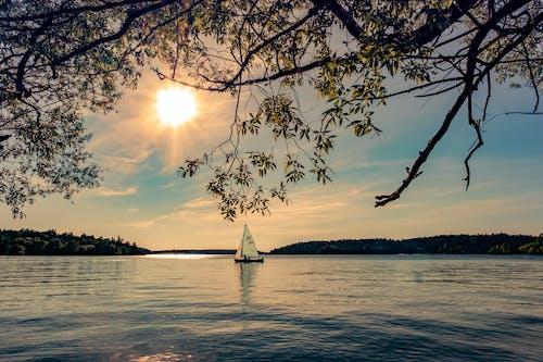 구름, 나무, 돛단배, 물의 무료 스톡 사진