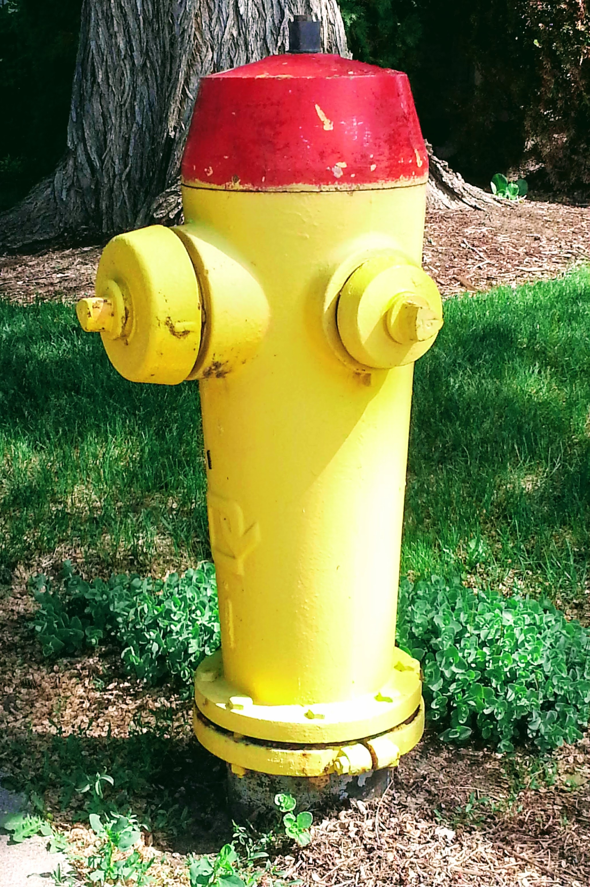Free stock photo of fire, fire hydrant, safety