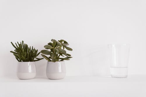 Two Round Ceramic Potted Green Plants and Liquid Filled Clear Drinking Glass