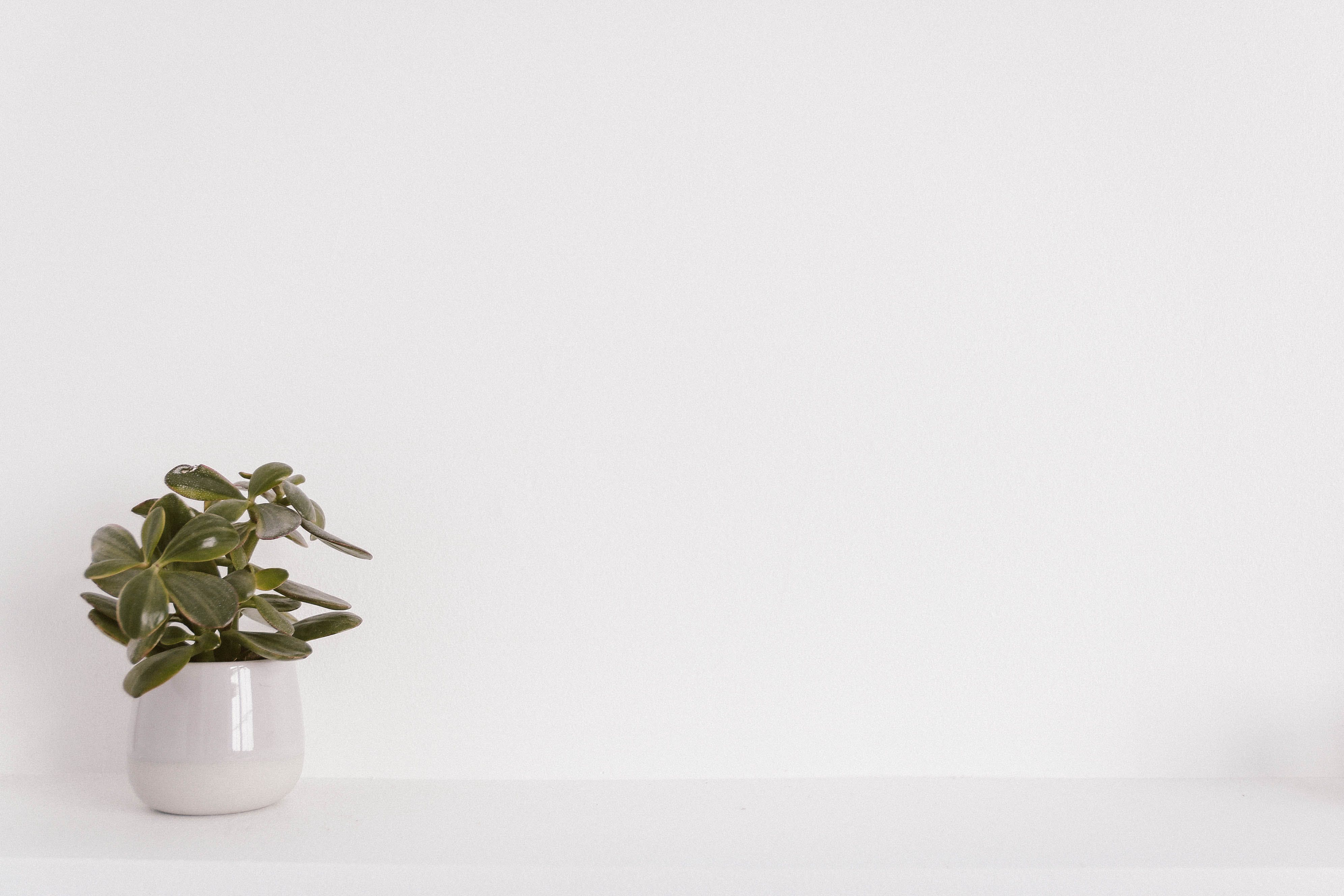 Green Potted Plant on White Ceramic Vase