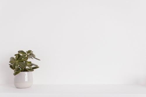 Fotos de stock gratuitas de blanco, color, diseño, flora