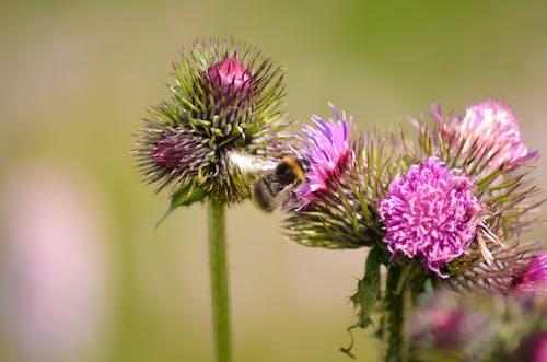 Fotobanka sbezplatnými fotkami na tému chrobáky, kvety, pastvina, tráva