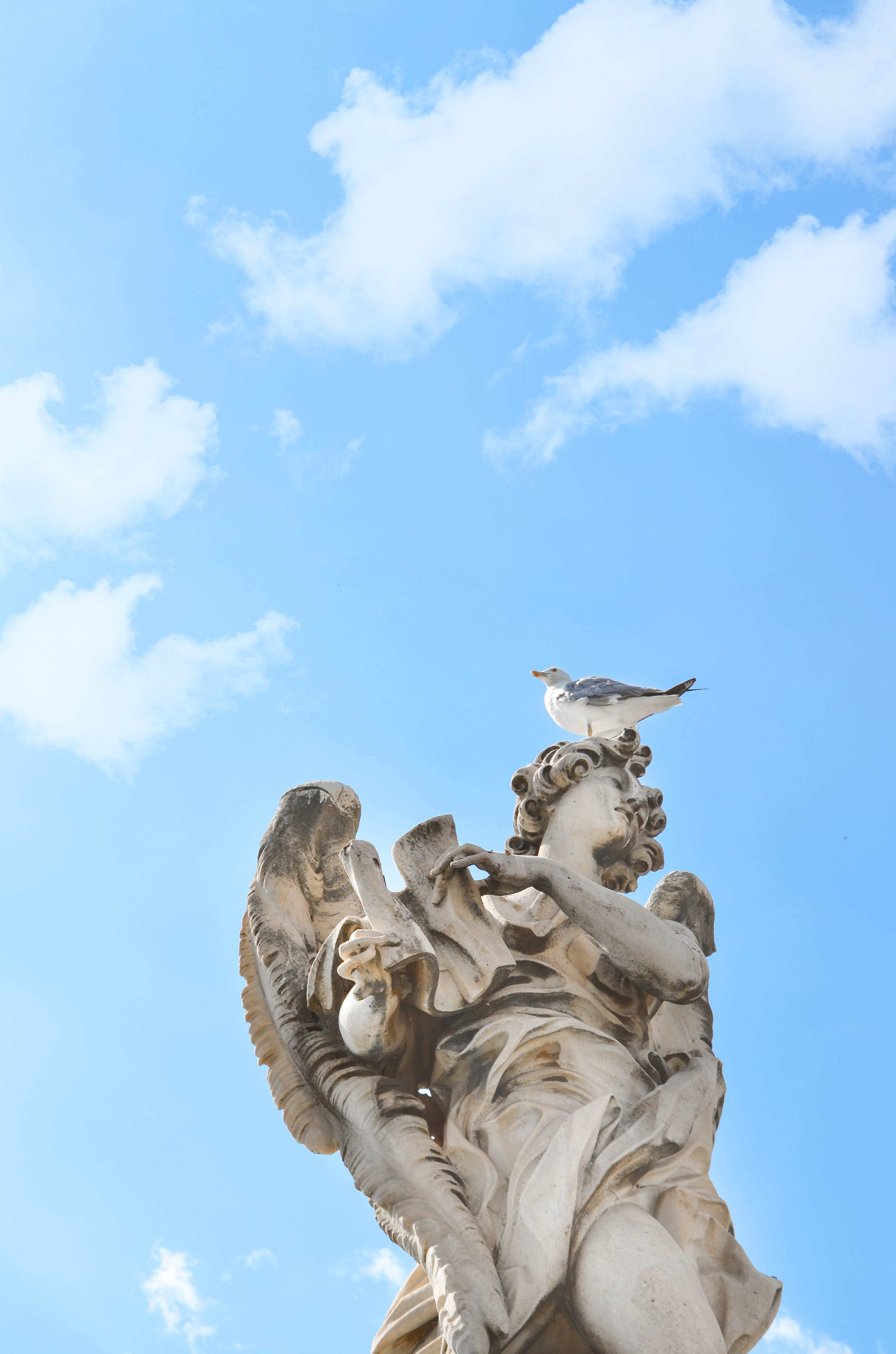 Free stock photo of monument, rome, seagulls, sky