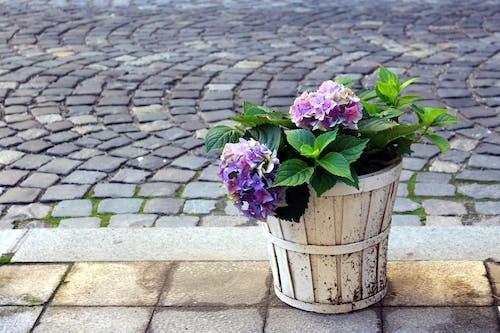 Gratis arkivbilde med blomster, blomsterbukett, fiolette blomster, gatekunst