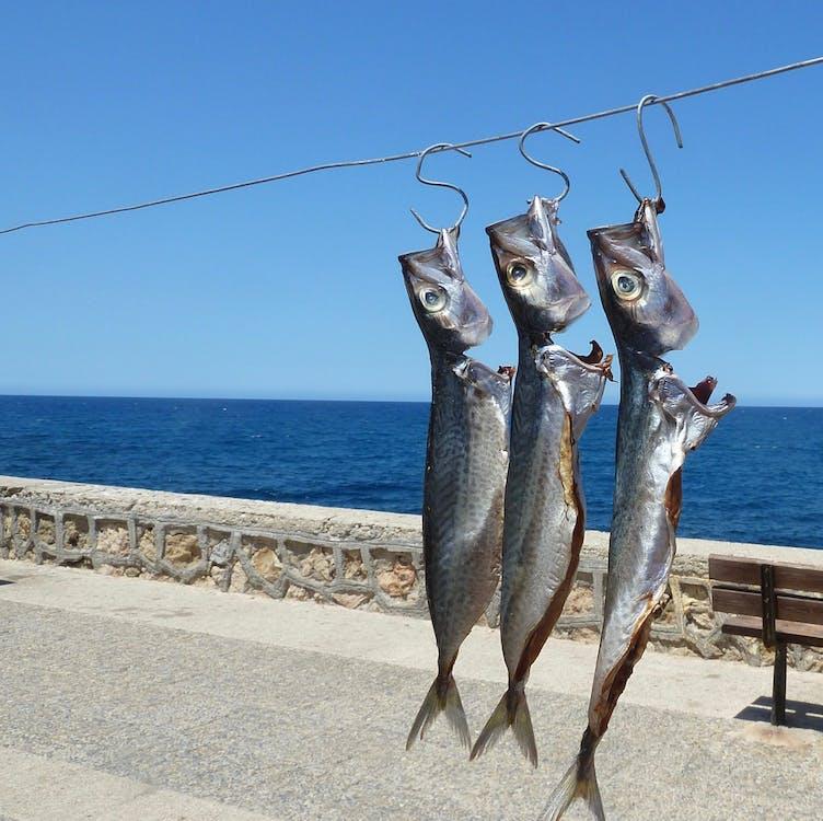 pobřeží, řecko, ryba