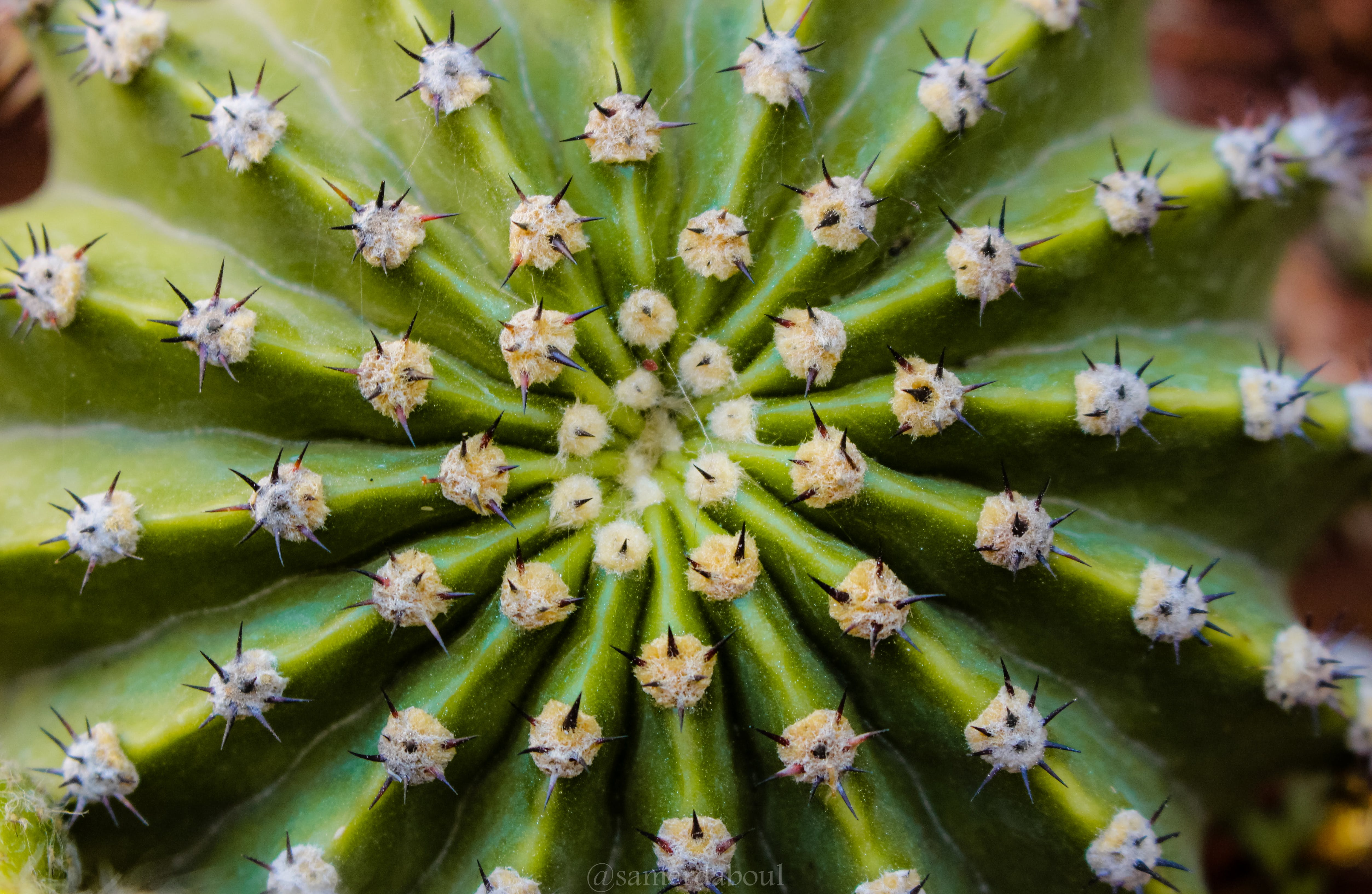 Free stock photo of agave, close-up, exotic, succulent