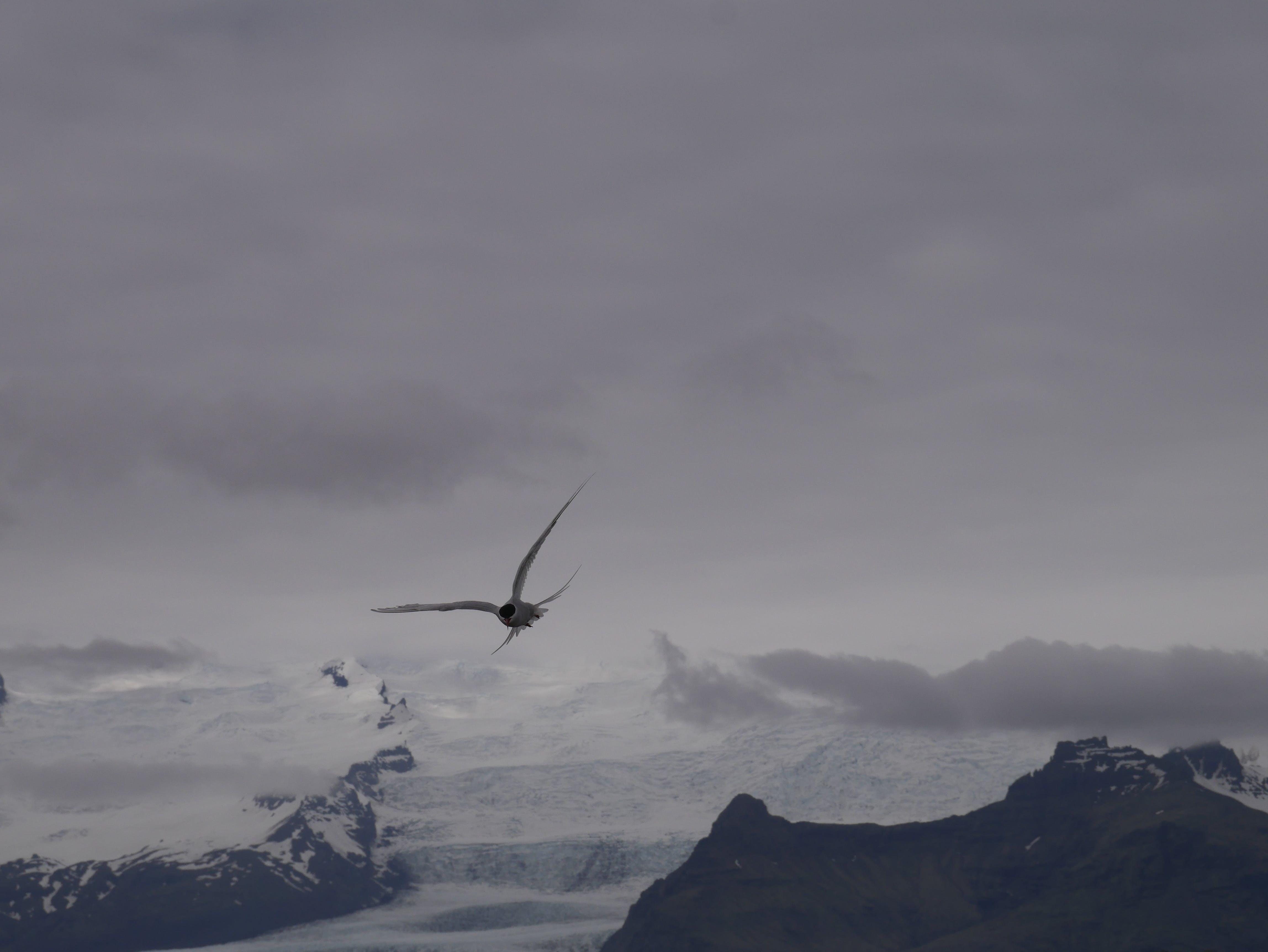 Free stock photo of grey, seagull, sky