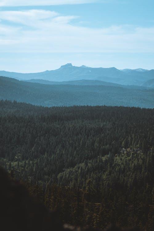Fotos de stock gratuitas de #bosque, montaña