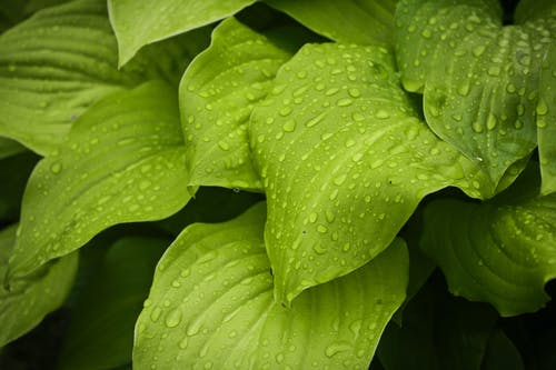 Macro Photography of Water Drops on Green Leaves