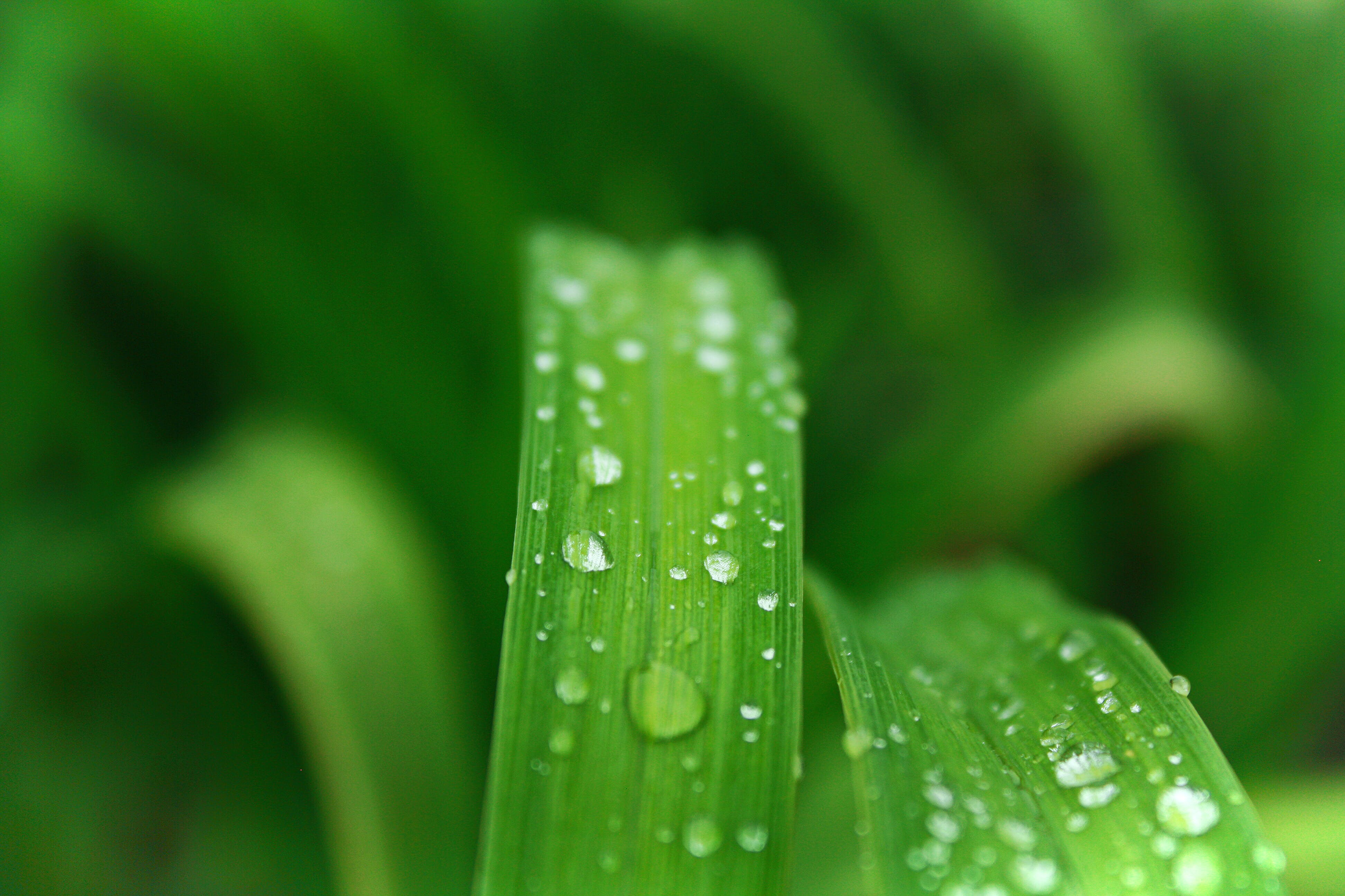 Closeup Photo of Green Leafed Plant With Water Dew