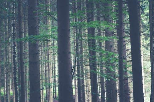 木, 森の中, 森林, 自然の無料の写真素材
