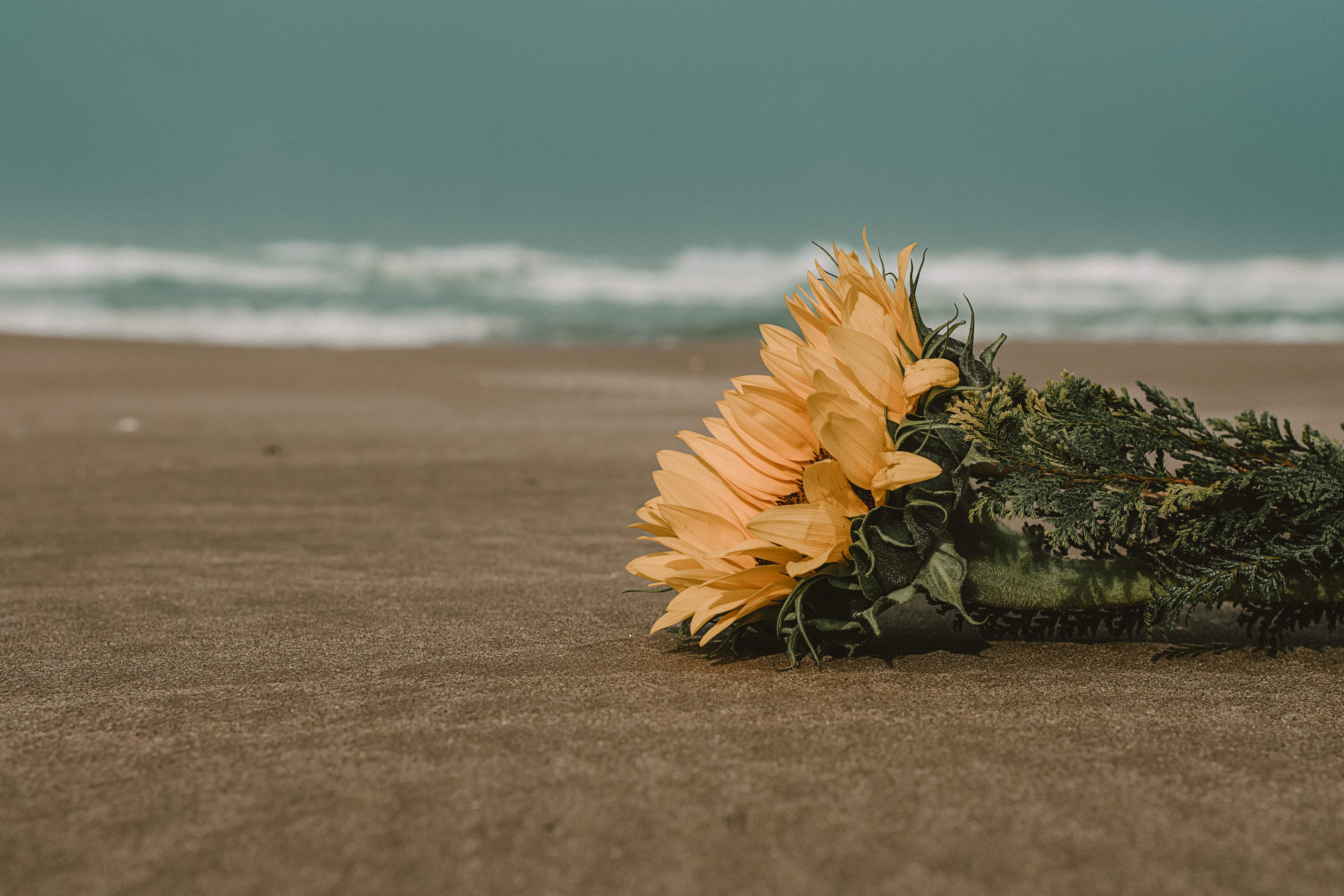 Yellow Flowers on Brown Sand