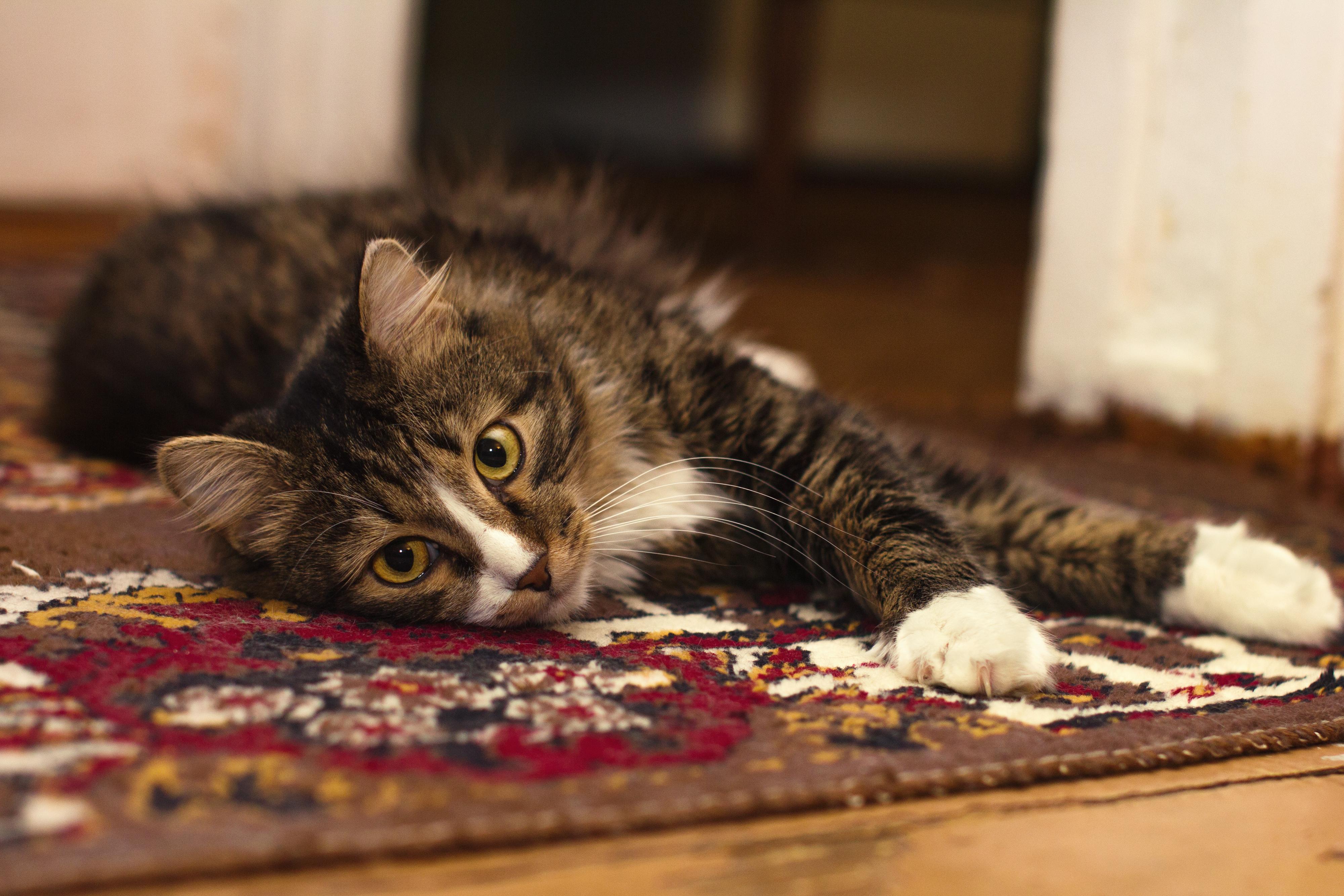 cat flea home treatment