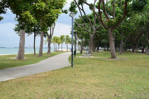 Free stock photo of beach, Beach park, happiness, nature