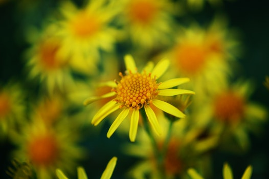 Yellow and Orange Petal Flower