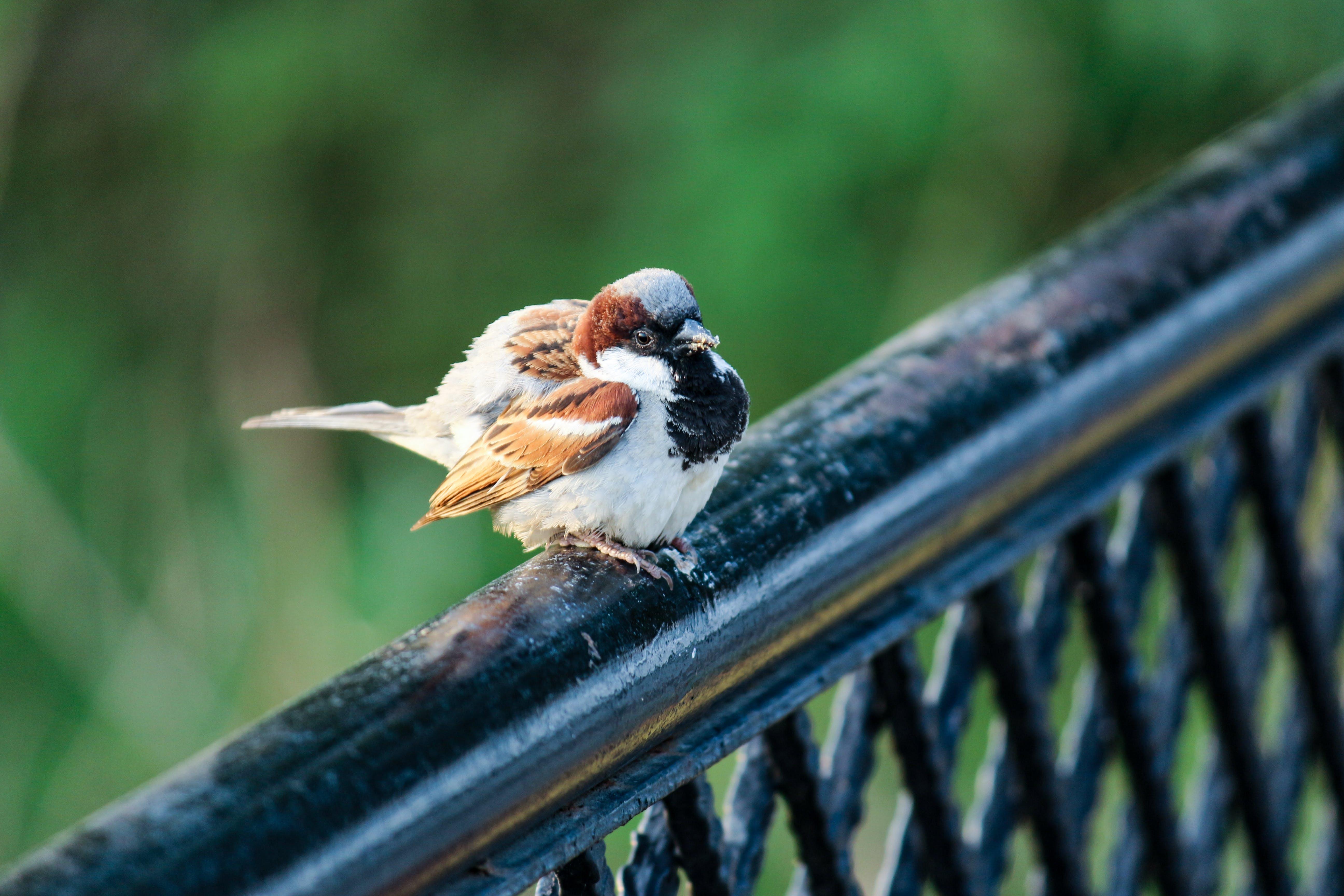 Foto d'estoc gratuïta de #animals #babies #wild #nest #birdfeeder #bird #pho, #naturesbeaty #naturehippys #birdsofinstagram #pre, #sparrows #birdhouse