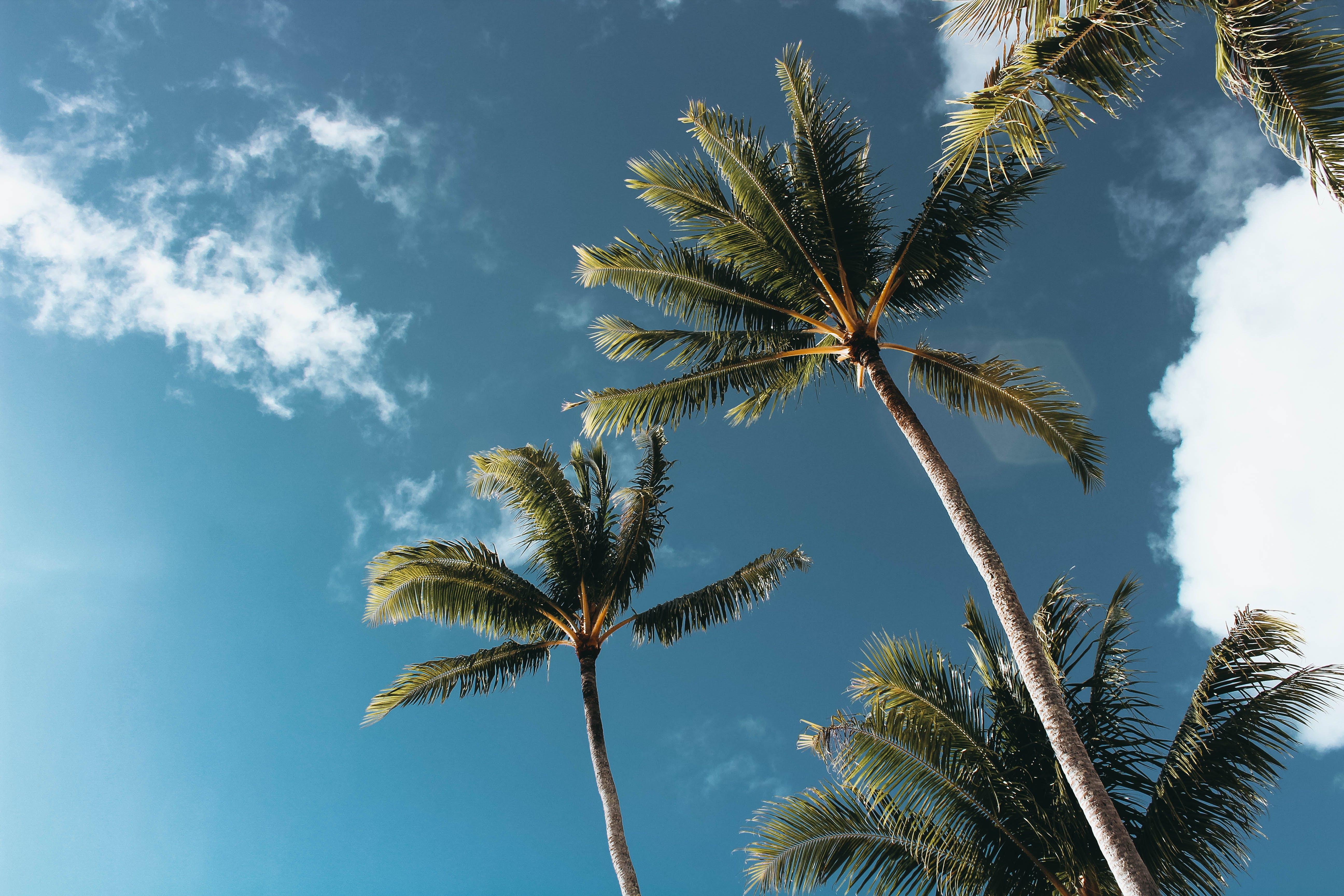 aufnahme von unten, bäume, froschperspektive