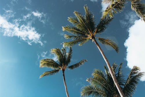Low-angle Photography of Palm Trees