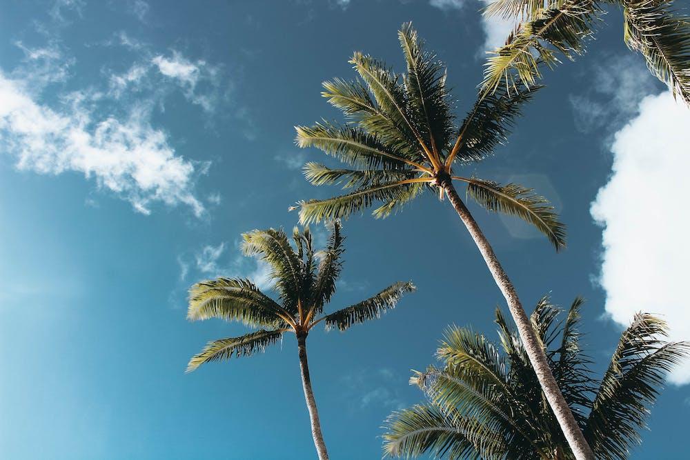 Картинка с пальмой