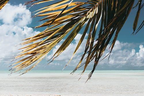 Gratis lagerfoto af dagtimer, hav, havudsigt, himmel