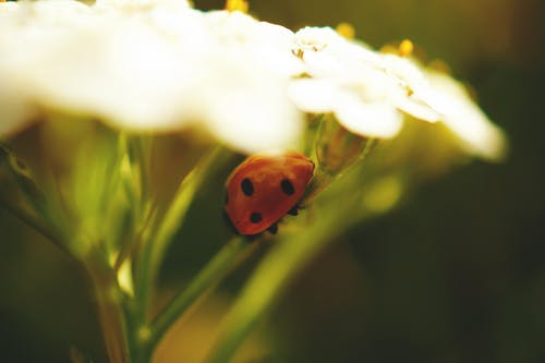 Red Ladybug on Green Flower Stem