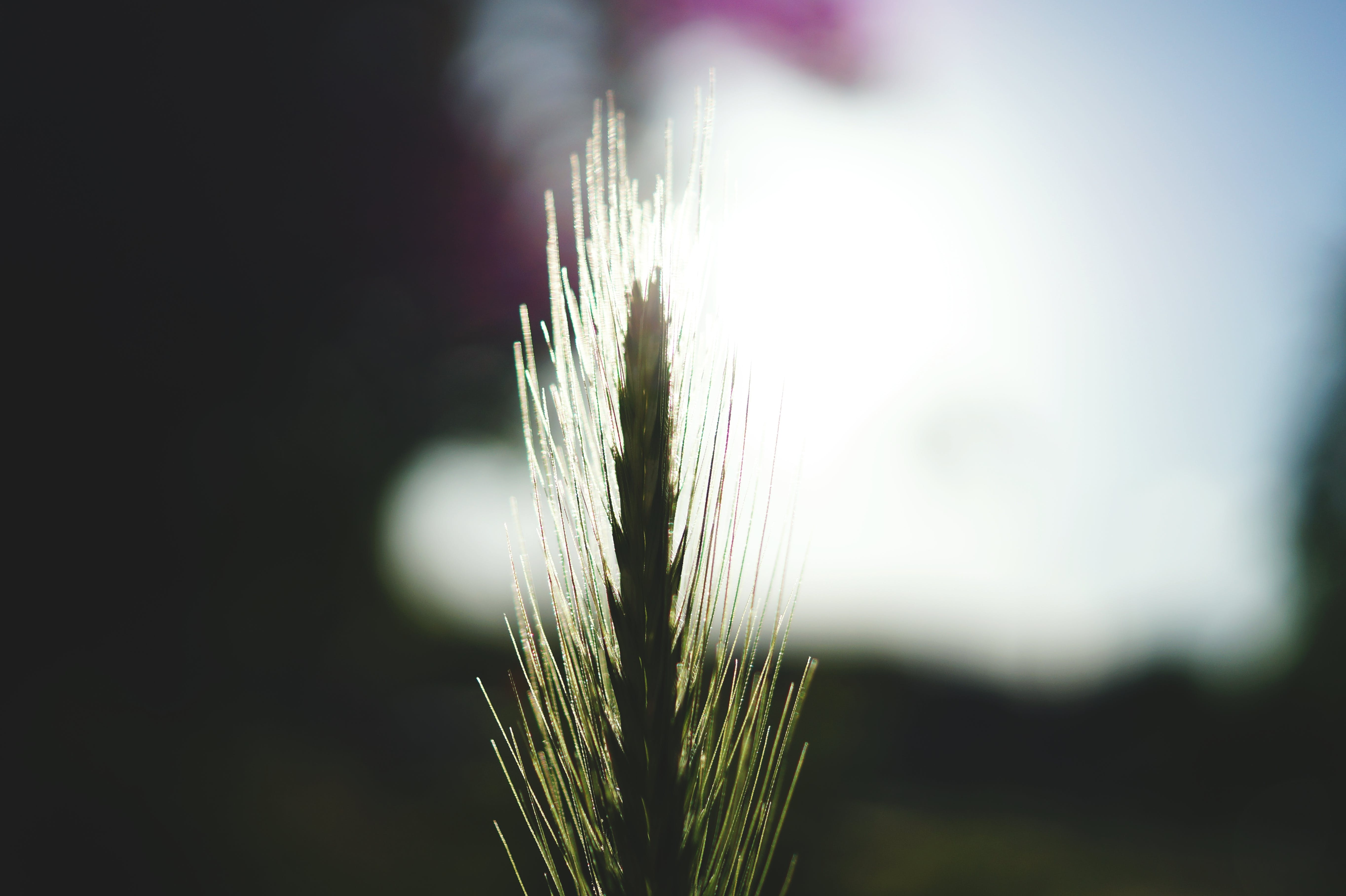 Focus Photography of Green Grass