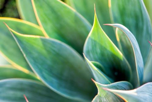 乾旱植物, 多肉植物, 廠, 灌木 的 免費圖庫相片