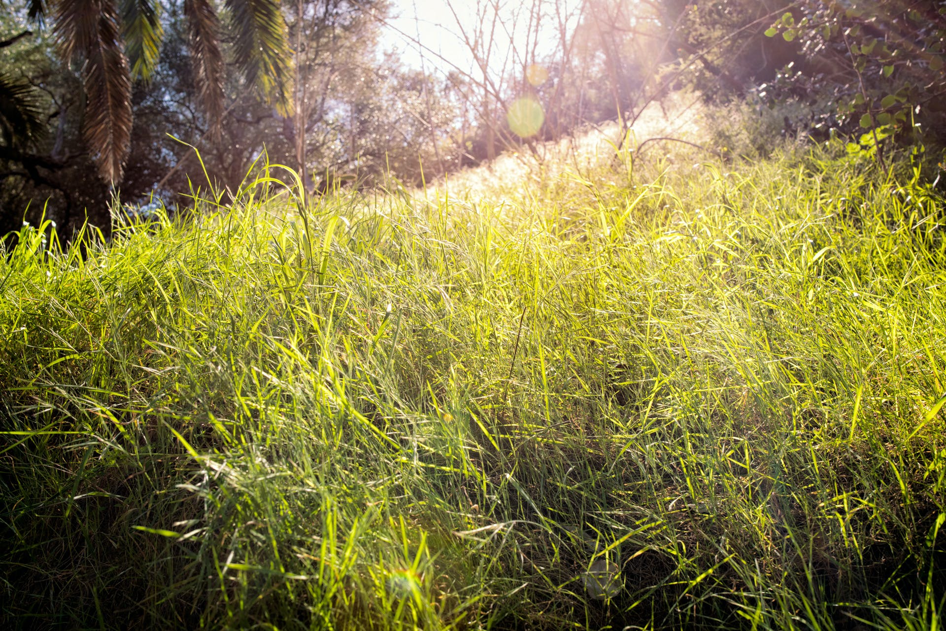 Free stock photo of Balboa, grass, hill, ray of sunshine