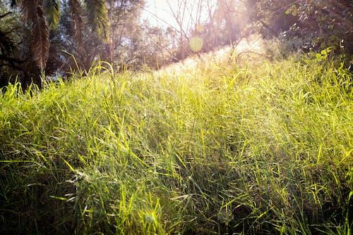 一縷陽光, 山丘, 巴爾博亞, 草 的 免費圖庫相片
