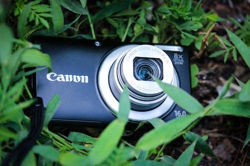 คลังภาพถ่ายฟรี ของ ca, canon_photos, canoneos, canonlens