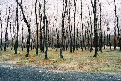 Ảnh lưu trữ miễn phí về cây, ngoài trời, rừng, Thiên nhiên
